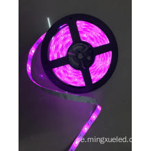 5050SMD 24V Pink Led Strip ljus